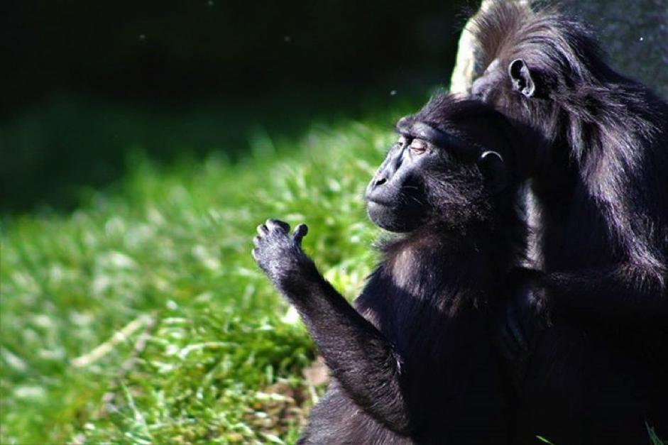 Jungle May-Hem Newquay Zoo Cornwall 365 May Half Term Top Picks