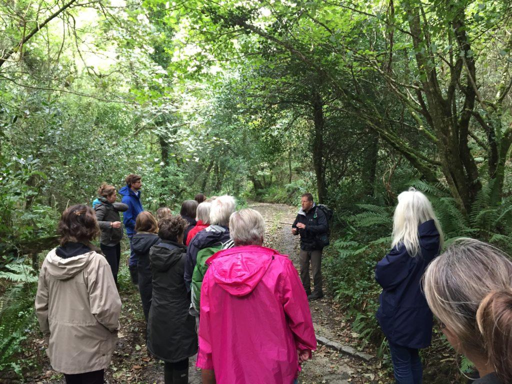 Steve Crummay Explore in Cornwall - Hazelnut tree Cornwall 365